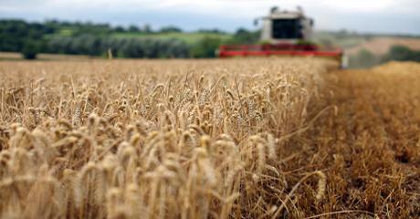 Harvest no
